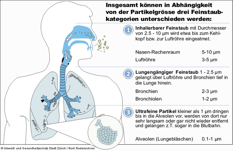 Feinstaub in der Lunge und gesundheitliche Folgen